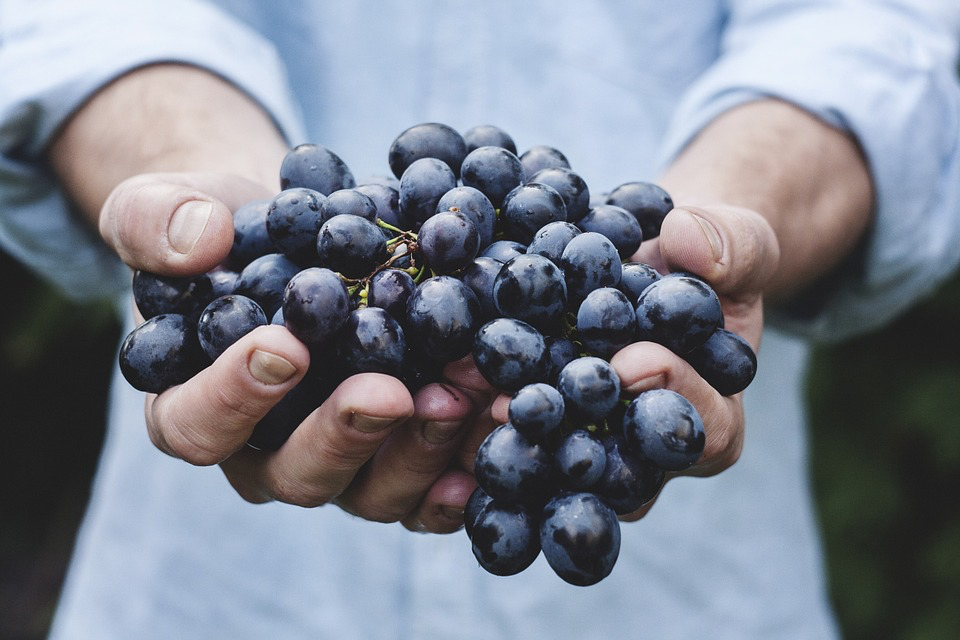 13 health benefits of grapes