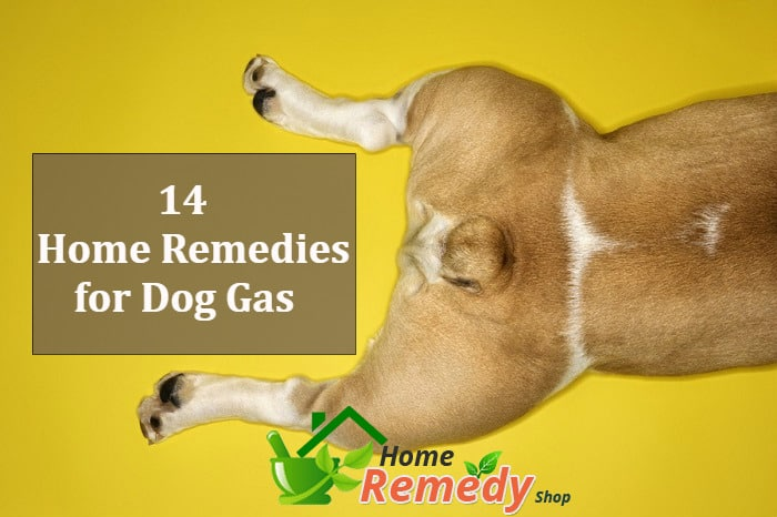 home remedies for dog gas
