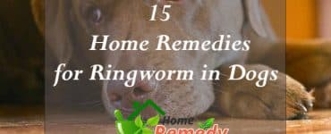 home remedies for ringworm in dogs