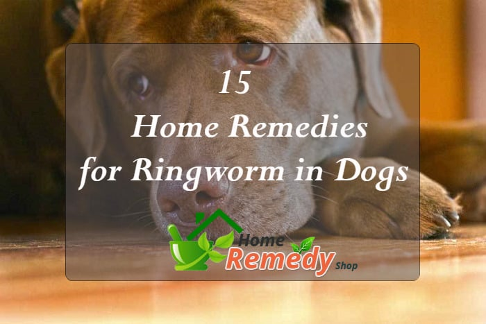 15 Home Remedies For Ringworm In Dogs