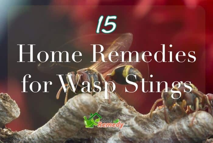 two wasps caption home remedies for wasp sting