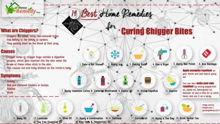 19 Best Home Remedies for Curing Chigger Bites + Infographic - Home ...