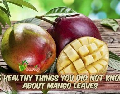 mango leaves and fruit