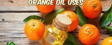 orange oil uses