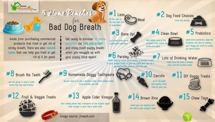 15 Home Remedies For Bad Dog Breath Home Remedies