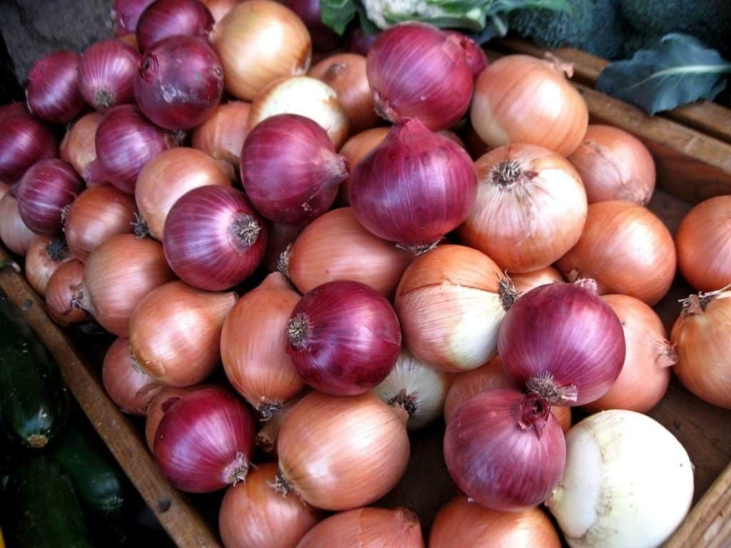 Healthy and fresh onions of all colors, health benefits of onions