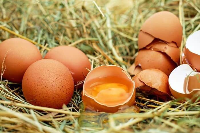 uova nell'erba