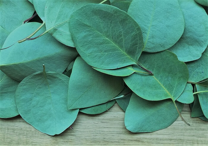eucalyptus leaves on table