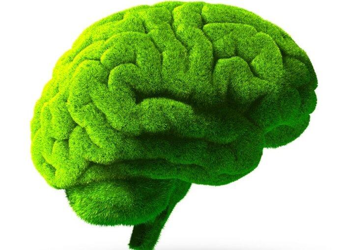 green brain illustration