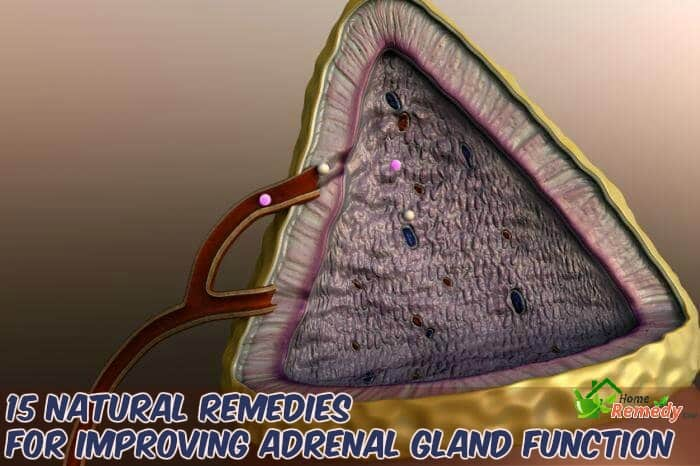 adrenal gland illustration with caption home remedies to improve function