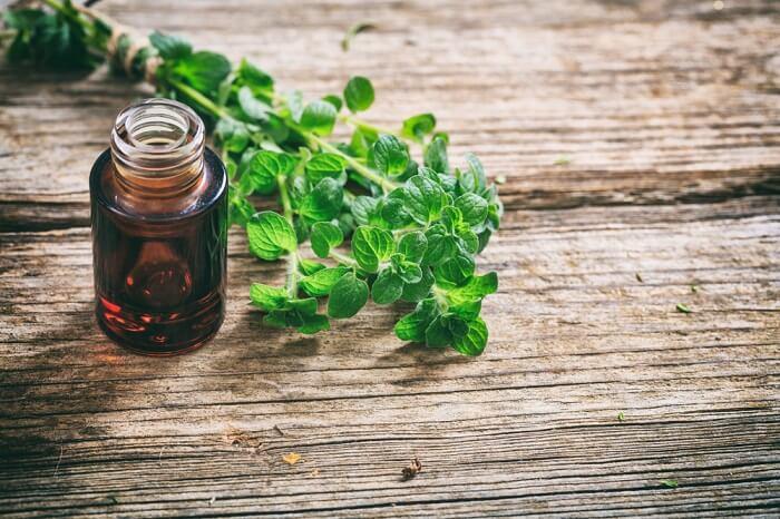 oregano oil in bottle