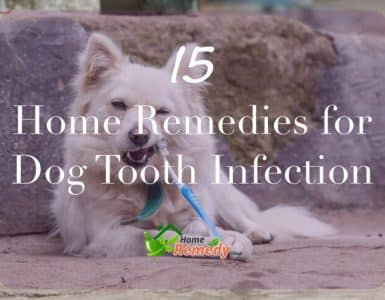 Home Remedies For Inflamed Dog Gums