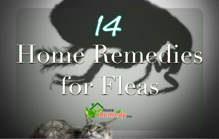 Home home remedies - Home remedies to keep fleas away ...