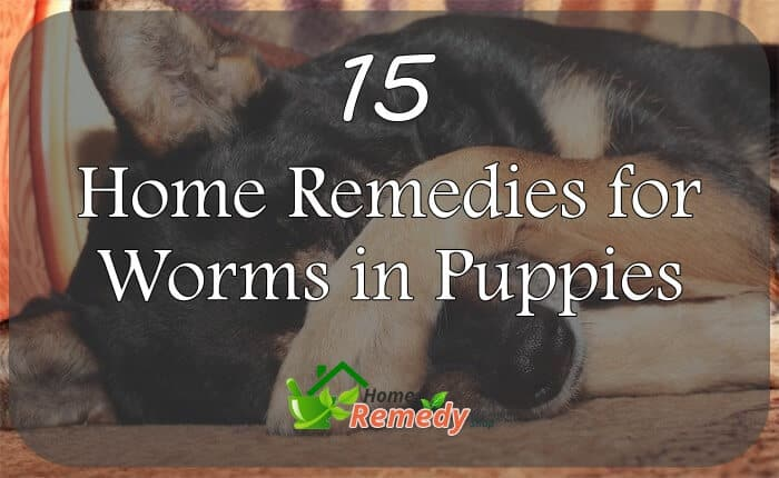 15 Home Remedies For Worms In Puppies Home Remedies