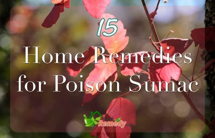 poison oak leaves caption home remedies for poison sumac