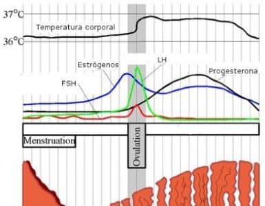 natural estrogen