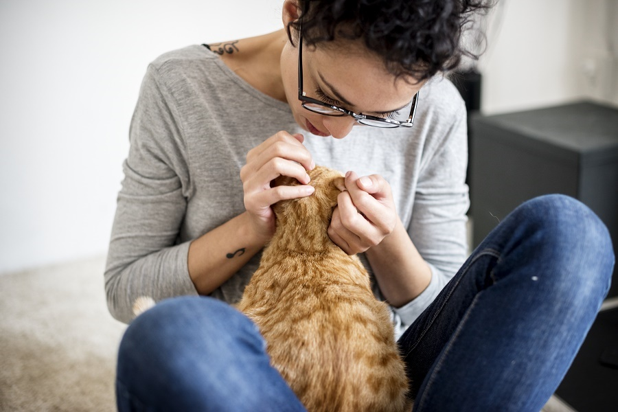 Woman looking for fleas on her cat