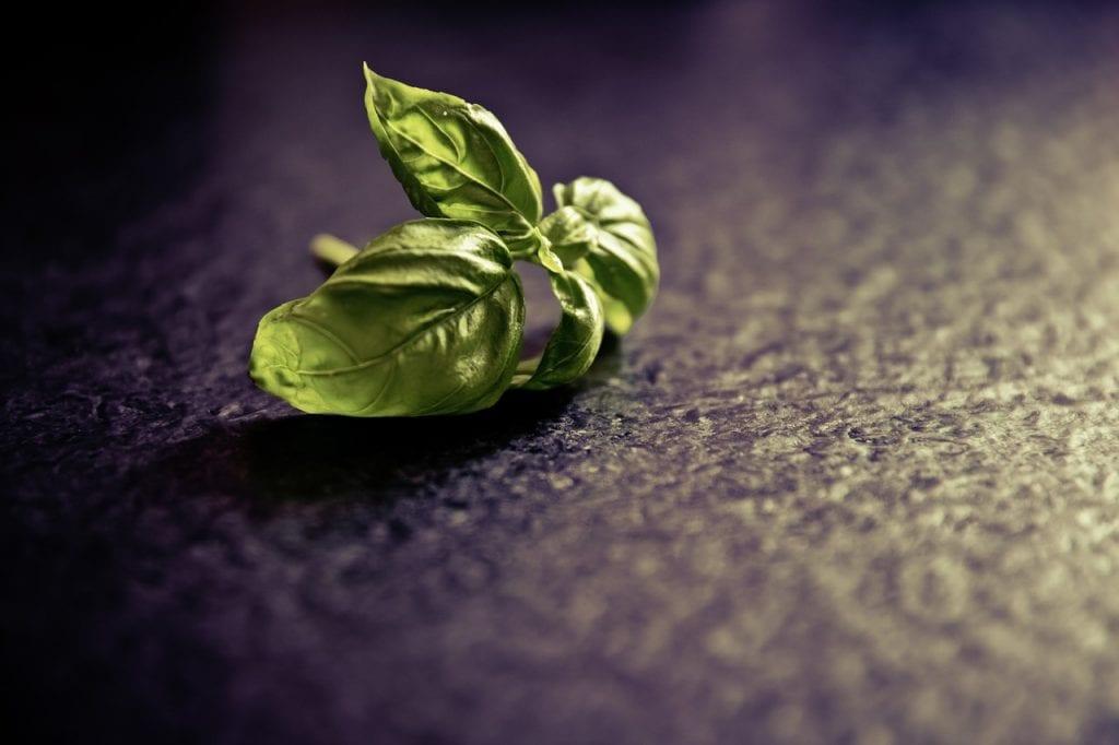 15 health benefits of basil