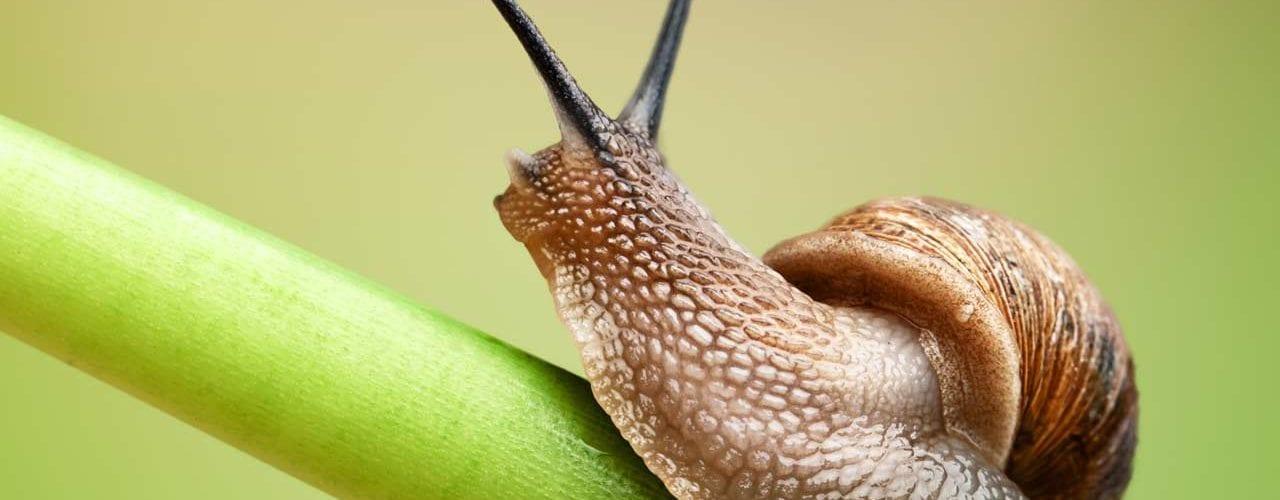 slugs crawling
