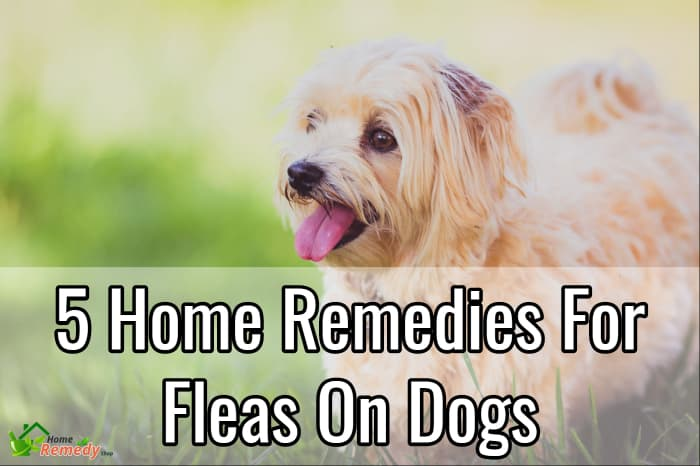 5 home remedies for fleas on dogs home remedies. Black Bedroom Furniture Sets. Home Design Ideas