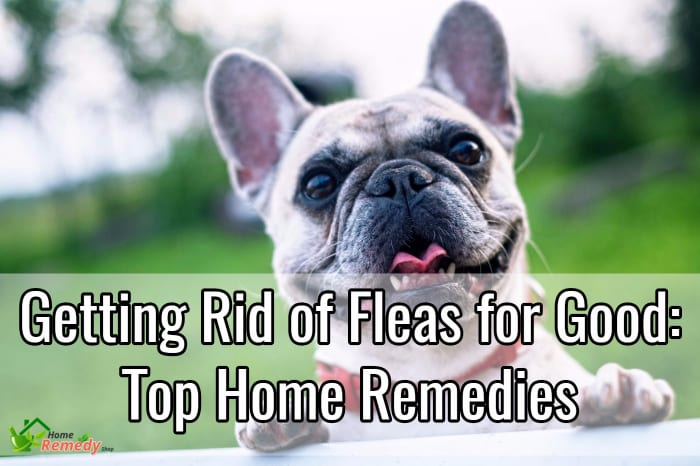 getting rid of fleas