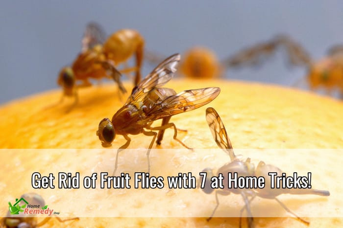 get rid of fruit flies with 7 at home tricks home remedies. Black Bedroom Furniture Sets. Home Design Ideas