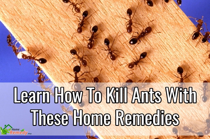 how to kill ants