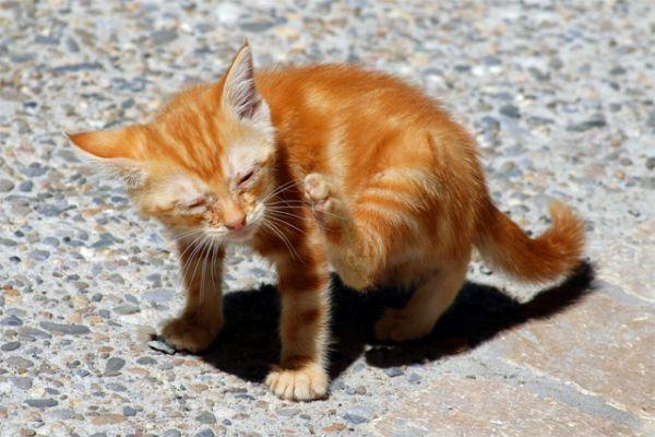 Cheap Dog And Cat Flea Treatment