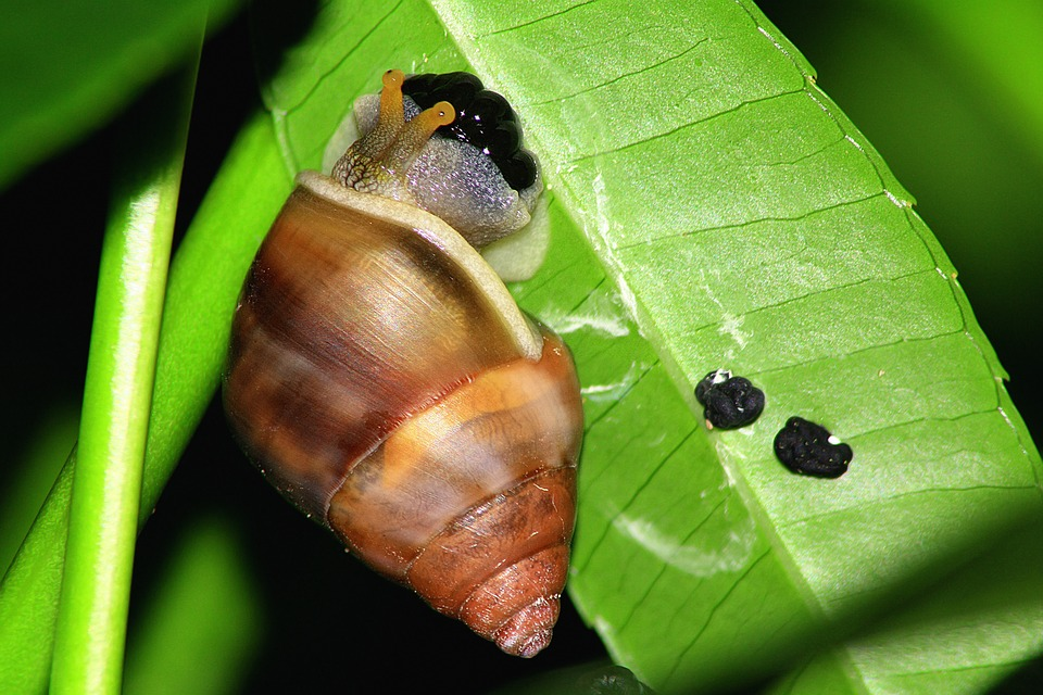 slug laying eggs on leaves