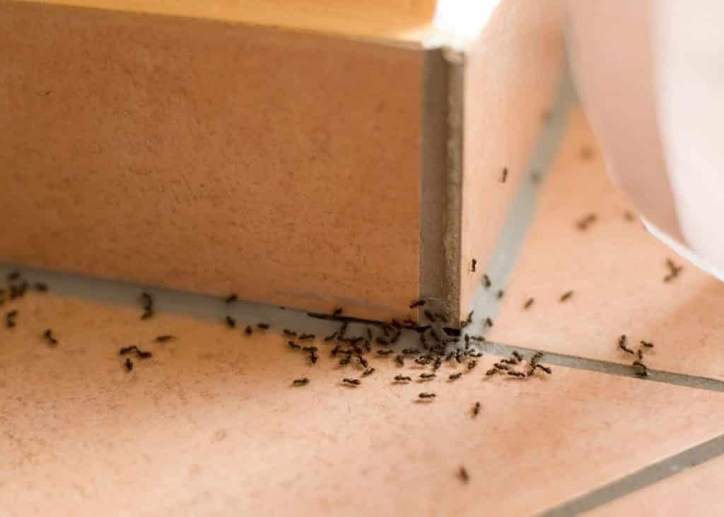 нужно-для-природного-муравей репеллент