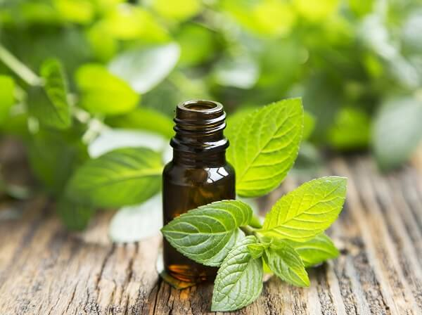 peppermint oil as ingredient in homemade bug spray