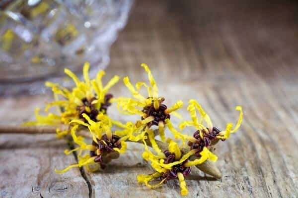 witch hazel as main ingredient in homemade hand sanitizer